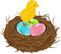 Free Easter Eggs In Nest Royalty Free Stock Photo - 19067575