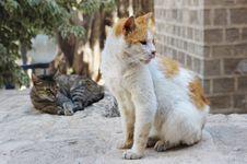 Free Stray Cats In Jerusalem. Royalty Free Stock Photography - 19060697