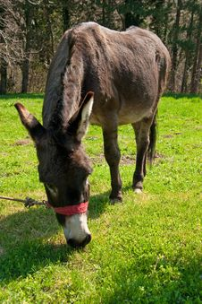 Free Donkey Stock Photo - 19060860
