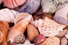 Free Shells Stock Photography - 19060862