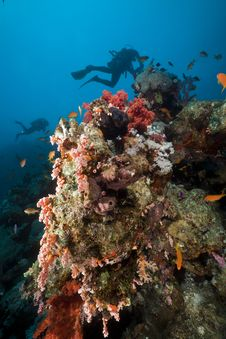 Free Underwater Scenery And A Diver In The Red Sea. Stock Photo - 19063570
