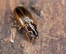 Free Ground Beetle Sitting On Wood Royalty Free Stock Photos - 19063878