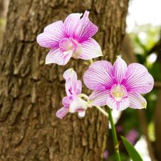 Free Orchid Stock Images - 19066564