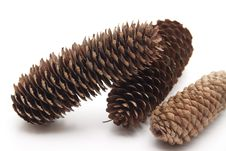 Free Fir Cone Royalty Free Stock Photos - 19067078