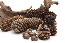 Free Fir Cone Royalty Free Stock Photos - 19067188