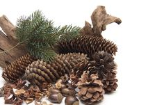 Free Fir Cone With Acorn Royalty Free Stock Image - 19067246