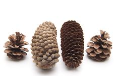 Free Pine Cones And Fir Cones Royalty Free Stock Image - 19067296