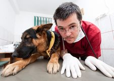Free Funny Vet With Dog Royalty Free Stock Image - 19067776