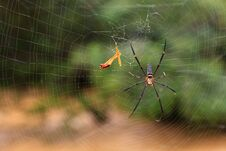 Free Spider In His Web Royalty Free Stock Photo - 19067785