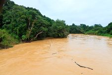 Free Brown River In The Jungle Stock Images - 19067894