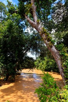 Free Brown River In The Jungle Stock Images - 19068074