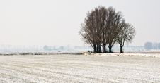 Snowy Landscape With Trees Royalty Free Stock Photos