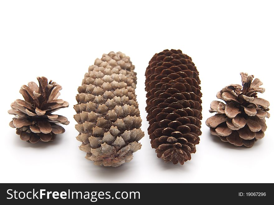 Pine cones and fir cones