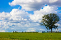 Free Landscape With Clouds And A Tree Royalty Free Stock Images - 19070699