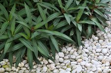 Free Green Plant In Stone Garden Royalty Free Stock Images - 19070519