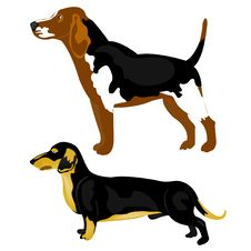 Dogs On White Background Royalty Free Stock Photos