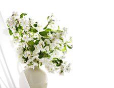 Free Spring Stock Photo - 19072500