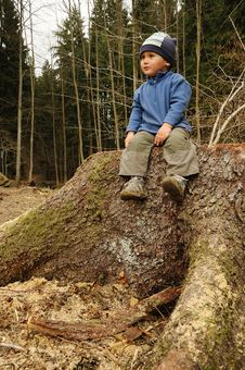 Free Child On Stump Stock Images - 19073874