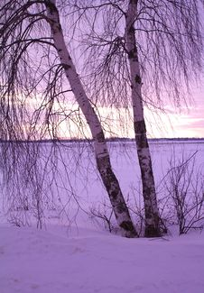 Free Two Birches At Sunset Stock Photography - 19074692