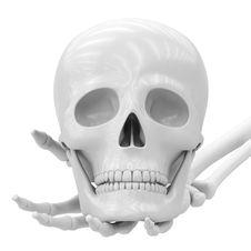 Free Skull Stock Photo - 19076860