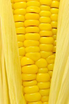 Free Corn Royalty Free Stock Image - 19077166