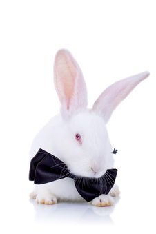 Free Adorable Bunny Withe Black Bow Tie Royalty Free Stock Photography - 19077847