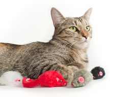 Free Lying Grey Cat With Toy Mice Royalty Free Stock Image - 19078396