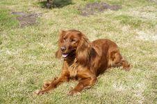 Free Dog Stock Photography - 19080122