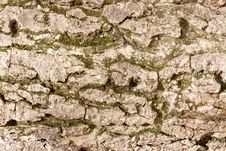 Free Bark And Moss Stock Images - 19082004