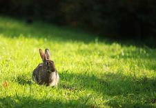 Free Rabbit On The Green Grass Stock Photography - 19082422