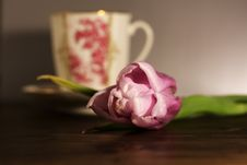 Tulip And Cup Royalty Free Stock Images