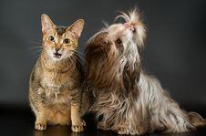 Tsvetnaya Bolonka And Cat Stock Photos