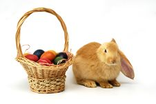 Easter Rabbit Royalty Free Stock Image