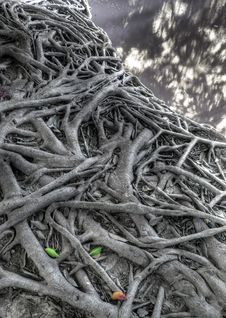 Free Tree Roots Royalty Free Stock Image - 19086586