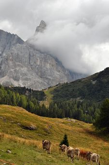 Free Mountains And Pastures Of Trentino Stock Image - 19088941