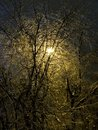 Free The Iced Over Trees. Winter Night. Sleet. Royalty Free Stock Photography - 19097407