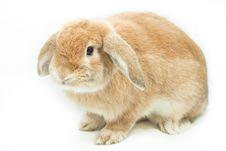 Free Rabbit Stock Image - 19091221