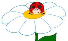 Happy Ladybug On A Daisy Royalty Free Stock Photo