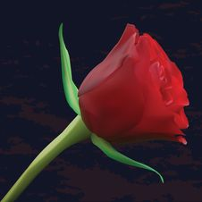 Free Red Rose On Dark Background Stock Photo - 19094360
