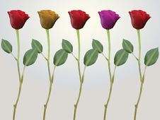 Free Red Pink Yellow Stem Roses Stock Images - 19094444