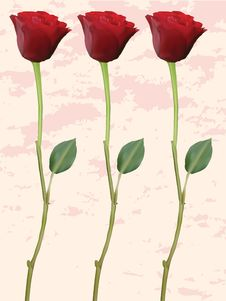 Free Single Red Roses On Distressed Background Stock Photos - 19094973