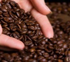 Free Coffee Beans In Human Hand Royalty Free Stock Photography - 19095417