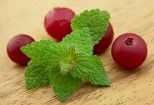 Free Fresh Mint And Cranberry Stock Photos - 19096133