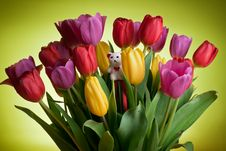 White Teddy Bear In Tulips Royalty Free Stock Photo