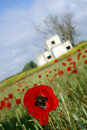 Free Poppy Field 3 Stock Photos - 1914253