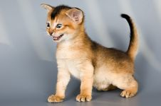 Free Kitten Whom The First Time Poses Stock Images - 1911194