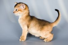 Free Kitten Whom The First Time Poses Royalty Free Stock Photos - 1911198