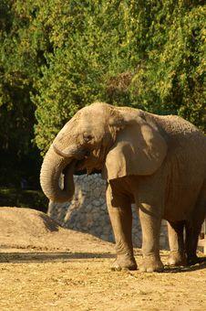 Free Elephant Stock Images - 1912774
