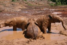 Free Elephants In Mud Bath Royalty Free Stock Photo - 1913345