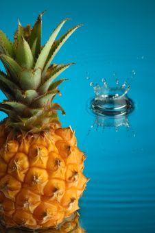Free Pineapple 2 Royalty Free Stock Photos - 1913628